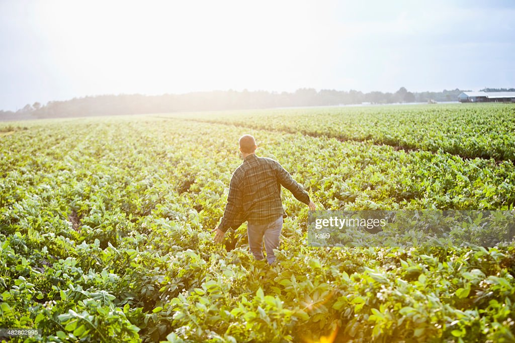 Sunrise on the farm, man working thru crop field : Stock Photo