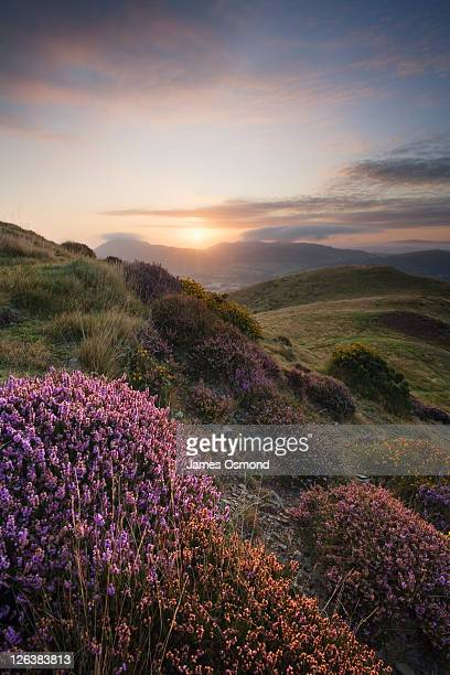 Sunrise on The Long Mynd, Shropshire, England, UK