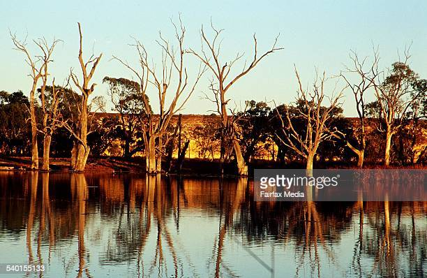 Sunrise on the Murray River at Blanchetown South Australia 26 August 2000 AFR Picture by VIRGINIA STAR
