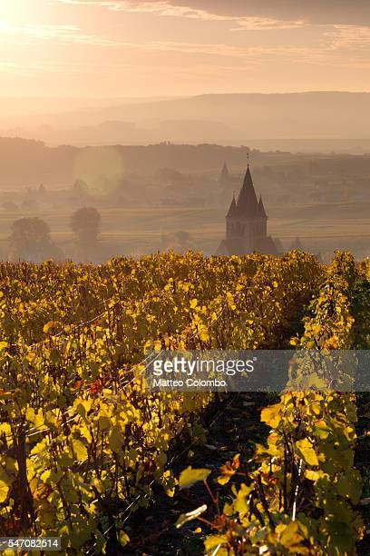 sunrise on the vineyards, ville dommange, champagne, france - campania stock pictures, royalty-free photos & images