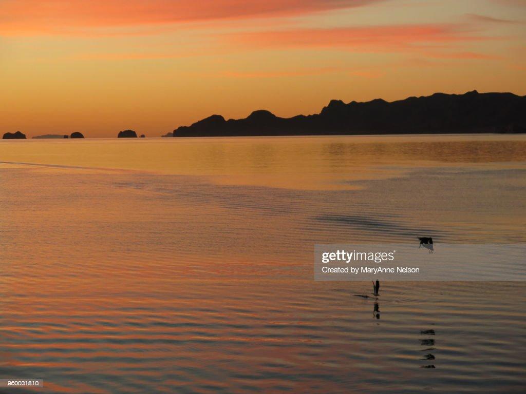 Sunrise Oranges and Two Birds Fishing : Stock-Foto