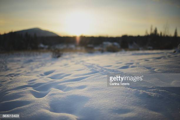 Sunrise over a field of snow with animal tracks