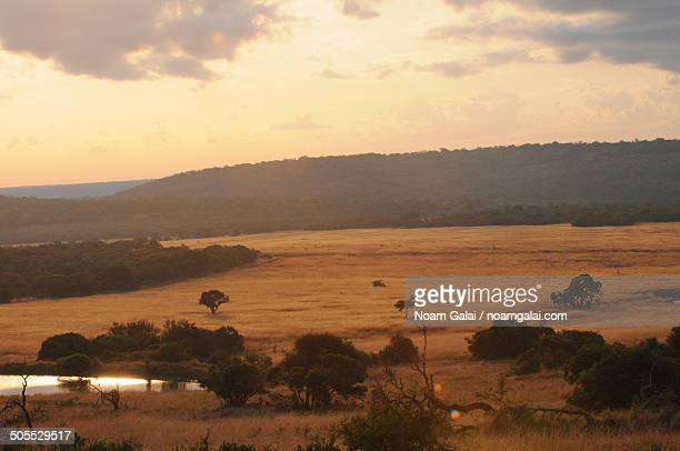 sunrise over african safari - noam galai stock pictures, royalty-free photos & images