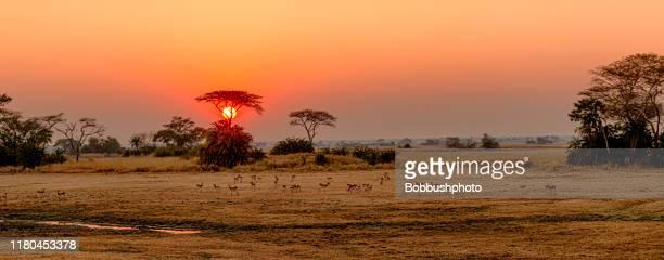 ブサンガ平原、カフエ国立公園、ザンビアの日の出 - ザンビア ストックフォトと画像