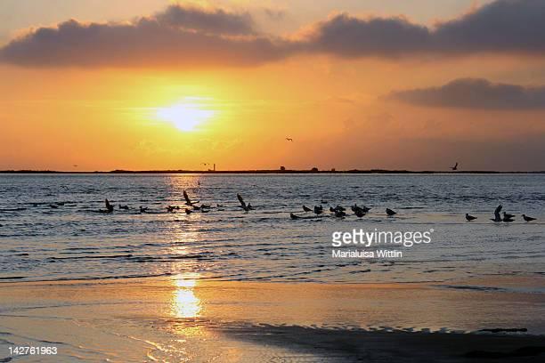 sunrise over ebro delta - delta del ebro fotografías e imágenes de stock