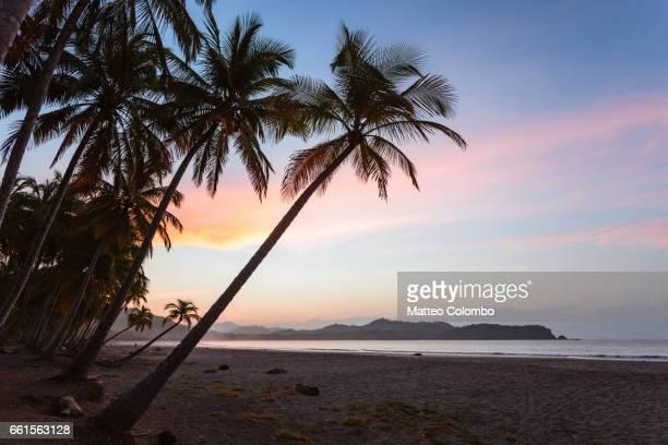 sunrise over exotic sandy beach with palm trees, costa rica - playa carrillo fotografías e imágenes de stock