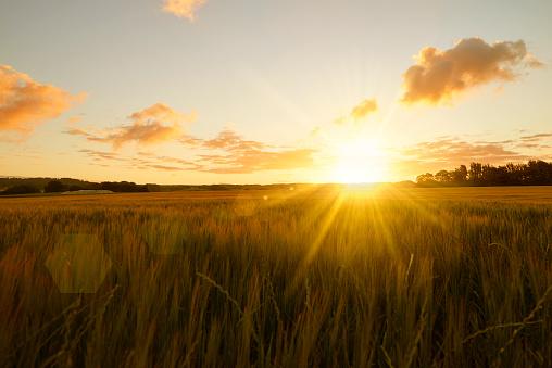Sunrise over field 825148240