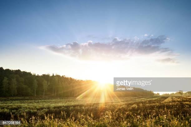 soluppgång över fält - september stockfoto's en -beelden