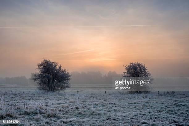 Sunrise over frozen foggy pasture