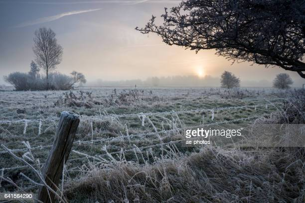 Sunrise over frozen foggy pasture