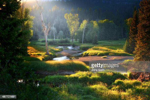 Sunrise over meadow and creek near McCall, Idaho