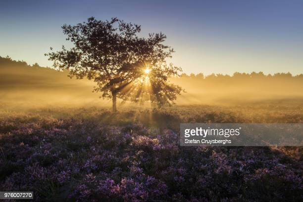 sunrise over misty landscape, flanders, belgium - west flanders stock pictures, royalty-free photos & images