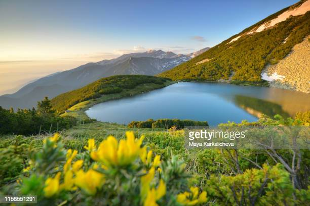 sunrise over mountain lake with with flowers in the foreground - freshwater stock pictures, royalty-free photos & images