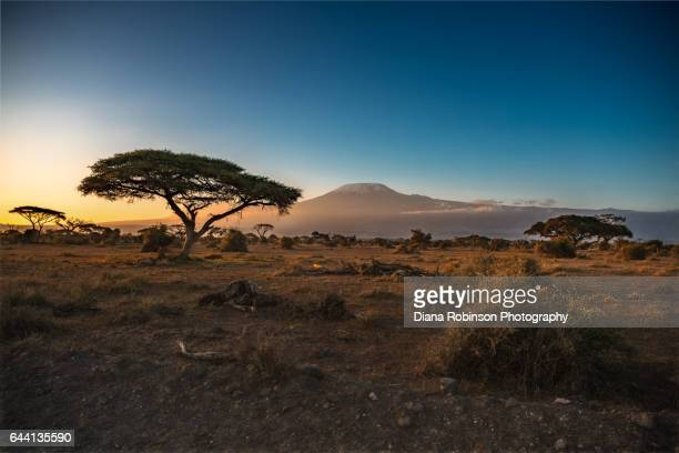 Sunrise over Mt. Kilimanjaro, Amboseli National Park, Kenya, East Africa
