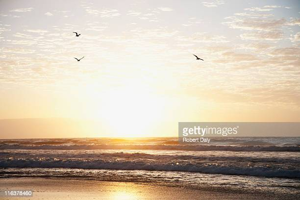 sunrise over ocean - bird stock photos and pictures