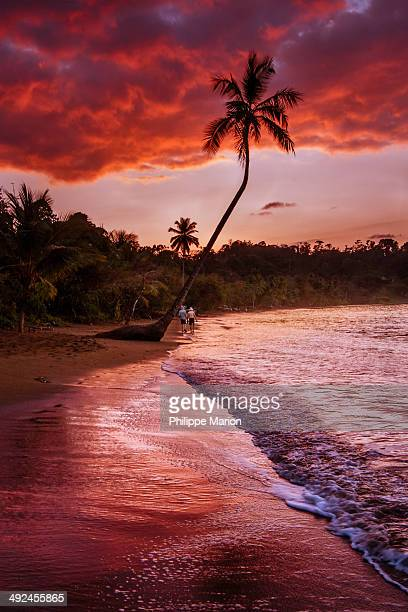 Sunrise over palm tree in Bahia Drake, Costa Rica