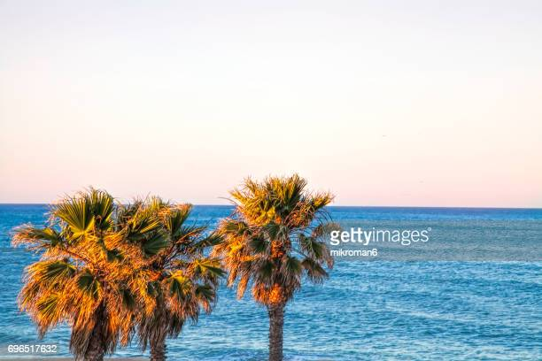 sunrise over palm trees in foreground of portugal coast. - faro city portugal stock photos and pictures