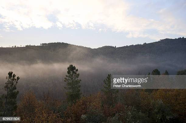 Sunrise over pine covered hills near the tiny village of Pisao near Coja in Arganil province. The autumn fall vista is still predominately covered in...