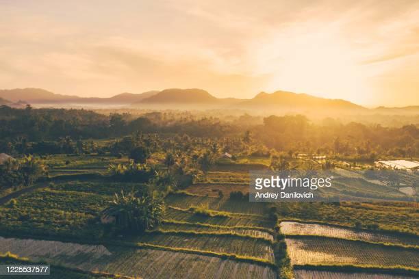 zonsopgang boven rijstterrassen, bali - rice terrace stockfoto's en -beelden