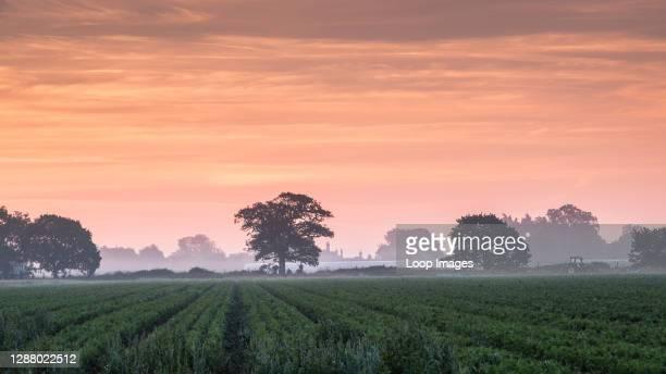 Sunrise over Suffolk fields.