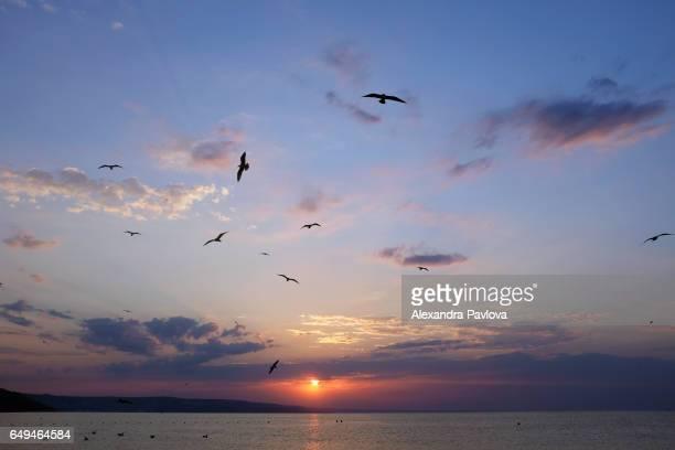 sunrise over the black sea, bulgaria - alexandra pavlova stock pictures, royalty-free photos & images