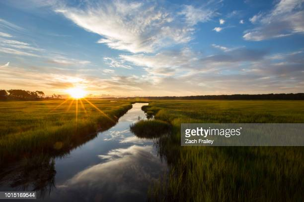 sunrise over the marsh - wildlife reserve stock pictures, royalty-free photos & images