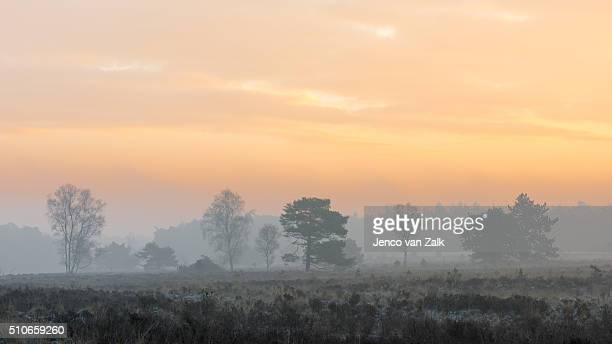 Sunrise over the moor