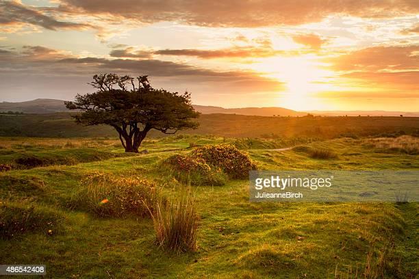 Sunrise over the moors, England