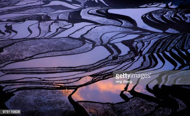 sunrise - paddy field stock pictures, royalty-free photos & images