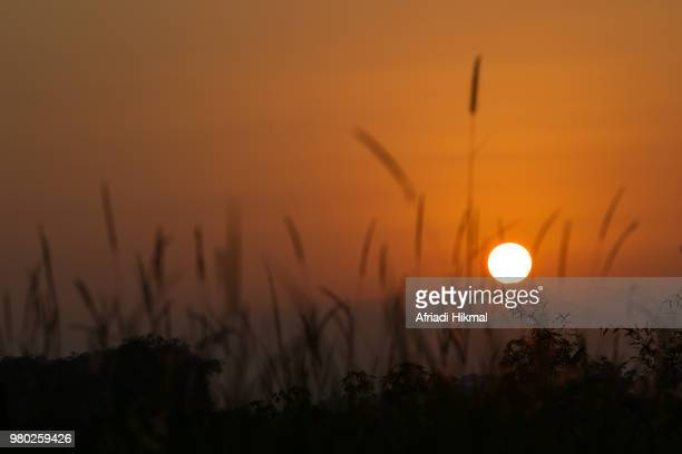sunrise - bogor stock pictures, royalty-free photos & images