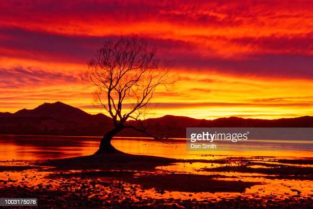 Sunrise Sky and Wanaka Willow