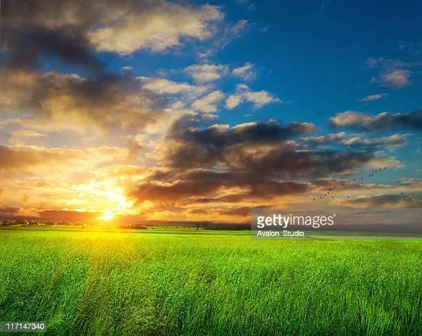 Sunrise spring landscape