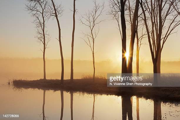 sunrise through mist over half day pond - レイクフォレスト ストックフォトと画像