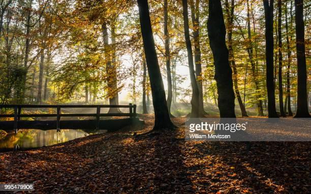 sunrise trunk bridge - william mevissen imagens e fotografias de stock