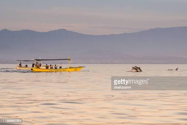 sunrise view over tourists watching for wild dolphins at bali, indonesia. - shaifulzamri stock-fotos und bilder