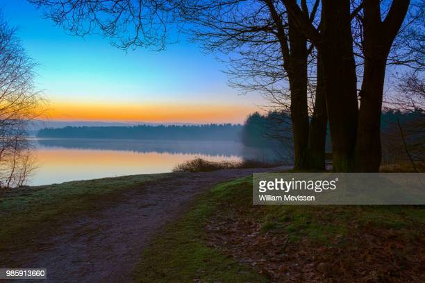 sunrise view 'tree' - william mevissen stock pictures, royalty-free photos & images