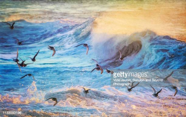 sunrise wave, foam and birds in flight seascape at jones beach, long island - wader bird stock photos and pictures