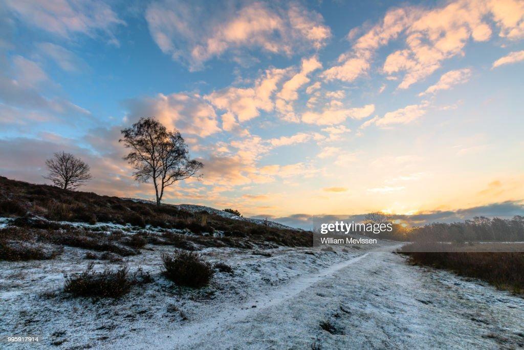 Sunrise Winter Path : Stockfoto