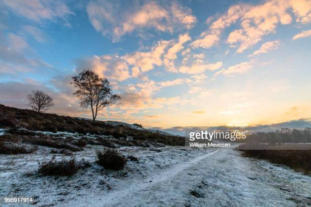 sunrise winter path - william mevissen stock pictures, royalty-free photos & images
