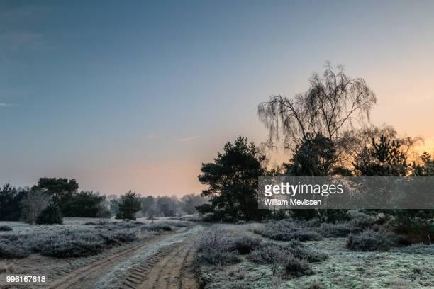 sunrise winter path - william mevissen stock pictures, royalty-free photos & images