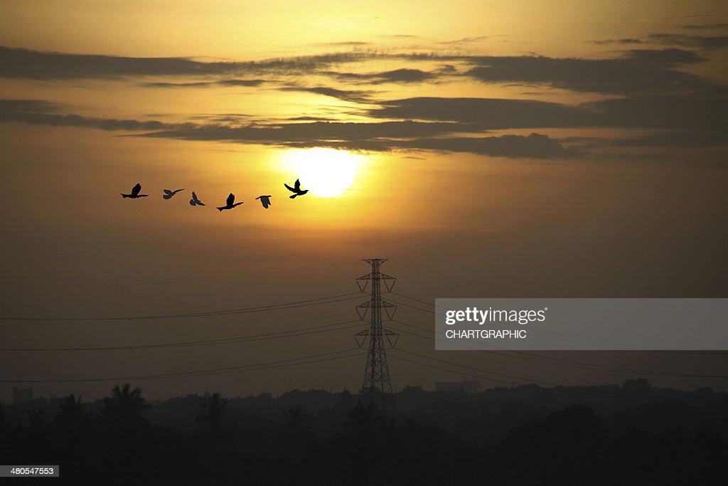 Sunrise mit high voltage Stangen : Stock-Foto