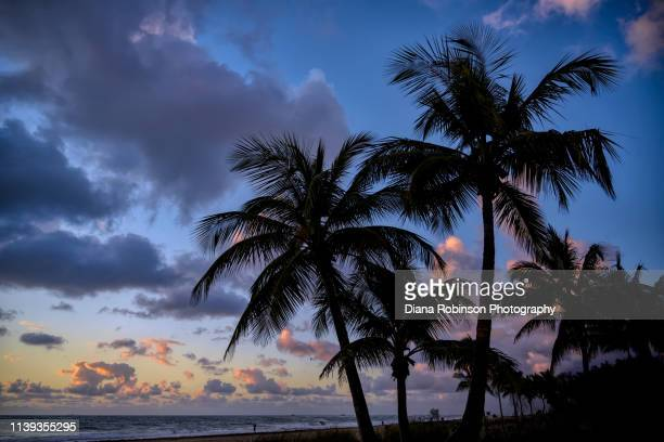 sunrise with palm trees on fort lauderdale beach, fort lauderdale, florida - sunrise fort lauderdale stock pictures, royalty-free photos & images
