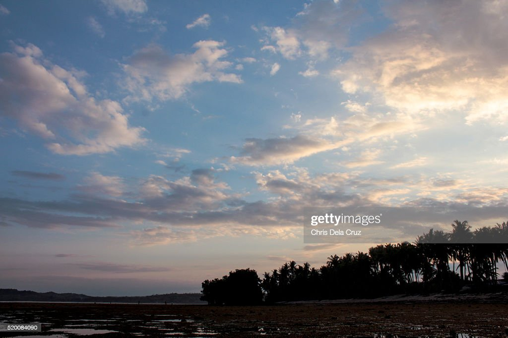 Sunrise with pinkish sky and lane of coconut trees : Stock Photo