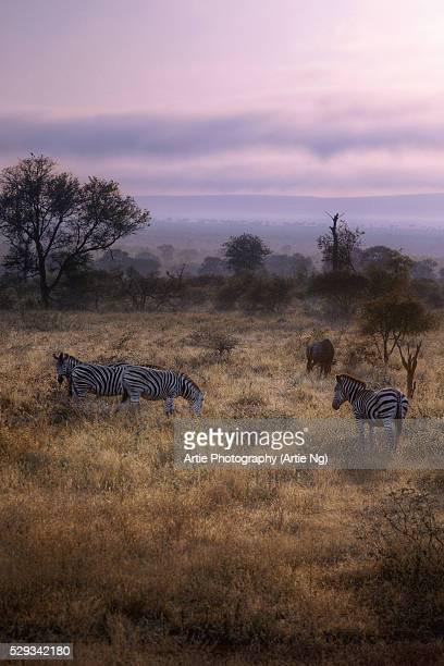 Sunrise With the Zebras & Wildebeest, Kruger National Park, South Africa