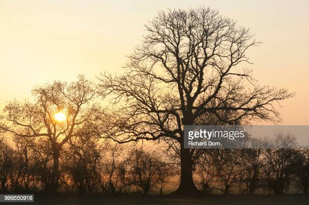 Sunrise with trees and fog, Rheinberg, Niederrhein, North Rhine-Westphalia, Germany