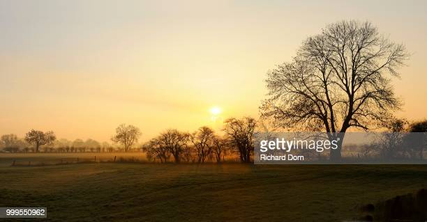 Sunrise with trees and ground fog, Rheinberg, Niederrhein, North Rhine-Westphalia, Germany