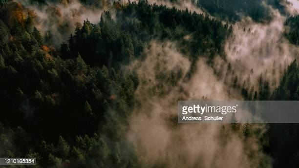 sunrise wood foggy - andreas solar stock pictures, royalty-free photos & images