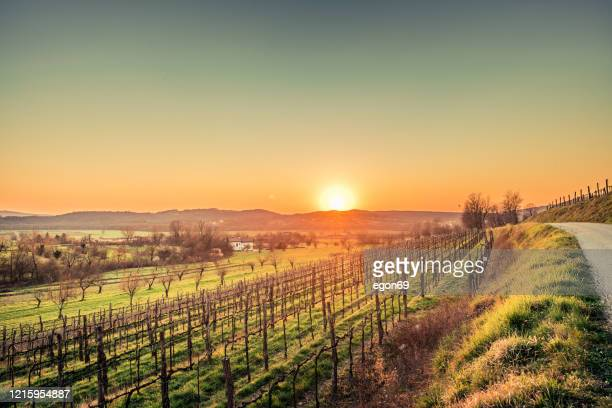 sunset above wineyard - traditionally slovak stock pictures, royalty-free photos & images