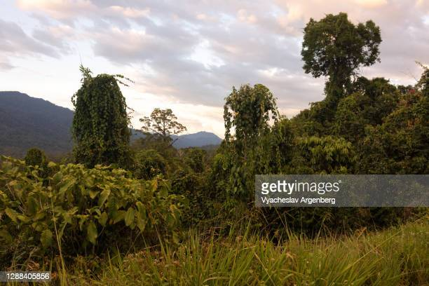 sunset afterglow in borneo tropical rainforest, maliau basin, malaysia - argenberg stock pictures, royalty-free photos & images