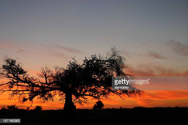 Sunset and Baobab Tree, Mali